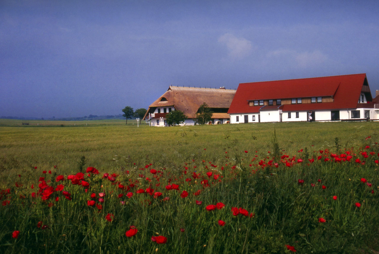 Poppies And Houses On Field Against Blue Sky
