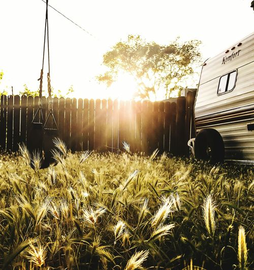 Growth Agriculture Field Sunset Outdoors Plant Nature Sunlight Rural Scene Day No People Grass Freshness Sky Peaceful Swing Rv Backyard