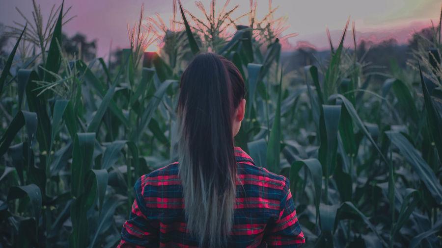 A girl among cornfields