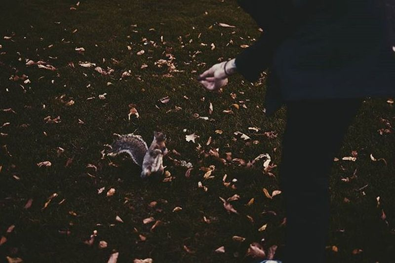Spending Halloween alone. I have no friends. This photo makes me smile though. Halloween Halloweenalone Squirrel Leaves Park Boston Fall Autumn VSCO Vscocam Vscovisuals Vscofall Vscoautumn Portrait Black Goth Style Bleachmyfilm Brown Orange Grass Boston Hand Tattoos Xvx veganstraightedgenikond5300animalcreature
