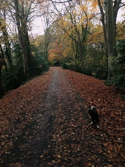 More exercise. Tree Autumn One Animal The Way Forward Animal Themes Nature Dog Outdoors Day Leaf No People Pets Branch Domestic Animals Mammal Dog Walking Exercise Exercise With Pets