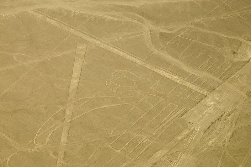 The Parrot - Nasca Lines - Peru Lines Nazca Peru Aerial Bird Nasca Nasca Lines Parrot