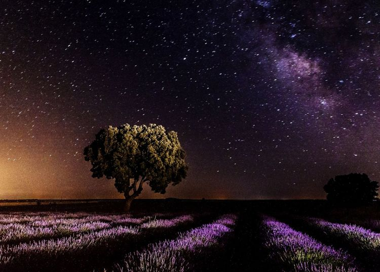 Trees on land against sky at night
