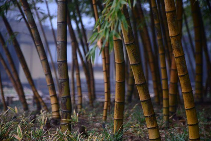 EyeEm Nature Lover Nature Photo Photography Nature_collection YAMAGATA SAKATA Bamboo