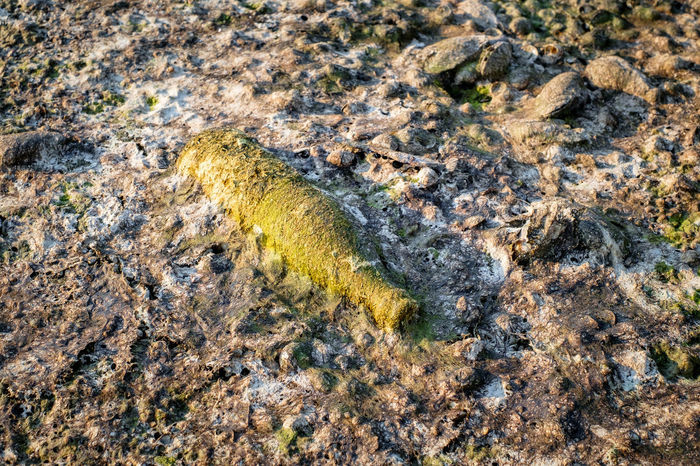 A bottle covered with algae polluting the beach Polution Is All Around The World Algae Animal Themes Backgrounds Bacterium Bottle Close-up Day Fossil Full Frame Nature No People Outdoors Poluted Earth Poluting Our World Polution Rock - Object Satellite View Sea Life Textured  Yellow