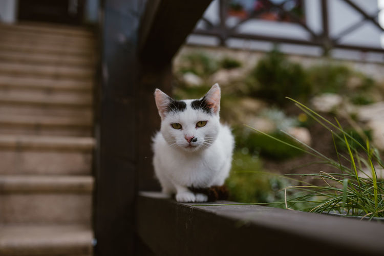 Portrait of white cat sitting outdoors