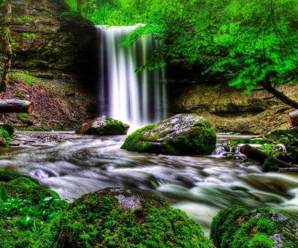 River of life Balti Hicham. The Amazing Human Body