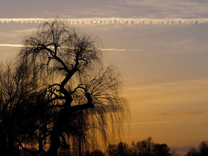 a bit romance today ;) beautiful sundown in ulm Afterglow Bare Tree Beauty In Nature Branch EyeEm Nature Lover Idyllic Landscape Nature Nature_collection No People Romantic Silhouette Sundown Tranquil Scene Tranquility Tree Ulm The City Light Vapor Trail Atmospheric Mood