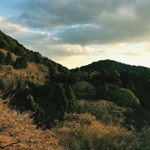 Kiyomizu KiyomizuTemple Kyoto,japan Kyoto, Japan Kyoto Place Of Worship Lost In The Landscape