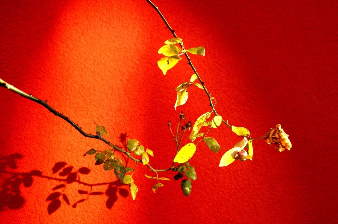 leaf, no people, autumn, change, twig, close-up, red, nature, outdoors, day, beauty in nature, branch, fragility