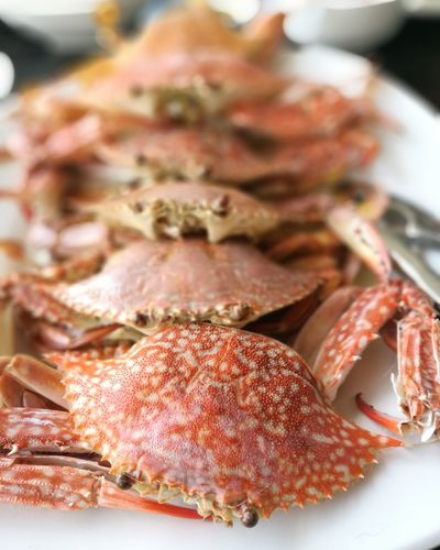 Visual Feast Seafood Food Food And Drink No People Crustacean Freshness Indoors  Healthy Eating Close-up Gourmet Ready-to-eat Day