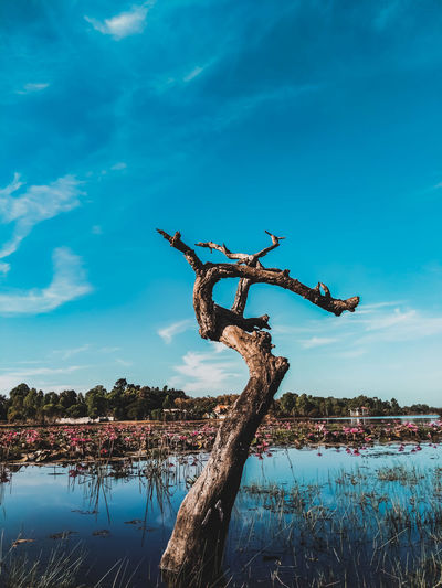 Driftwood on tree by lake against blue sky
