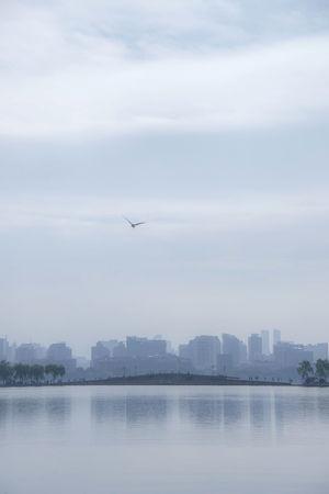 Bird City Cityscape Flying Hangzhou,China Sky The West Lake Water