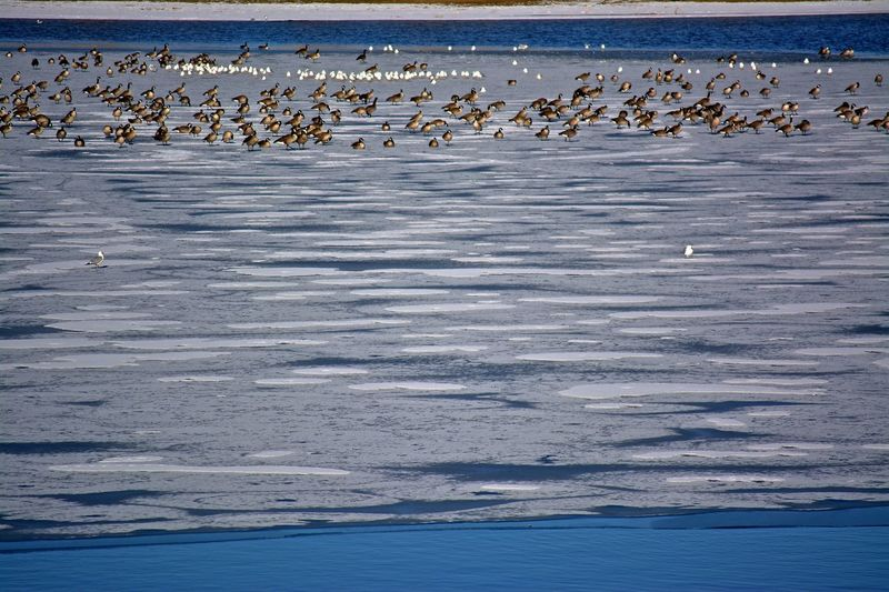 Abstract Ice Patterns Animal Themes Animal Wildlife Animals In The Wild Beauty In Nature Bird Day Ducks And Geese Flying Frozen Lake, Nature No People Outdoors Sea Water
