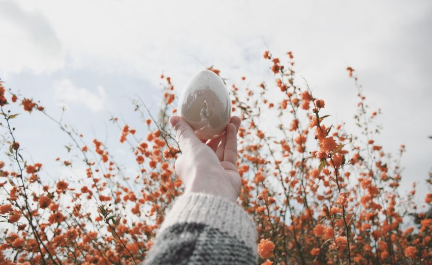 Low Angle View Of Woman Holding Egg Against Sky