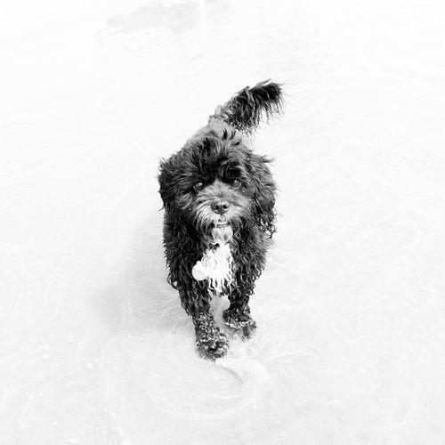 Black And White Dog EyeEm Selects Dog Pets Domestic Animals One Animal Animal Themes Mammal No People