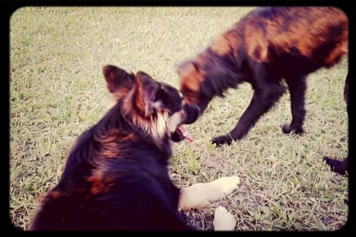 Puppies ✌ Sunshine ♡ My Loves ♥ Puppy Playtime First Eyeem Photo
