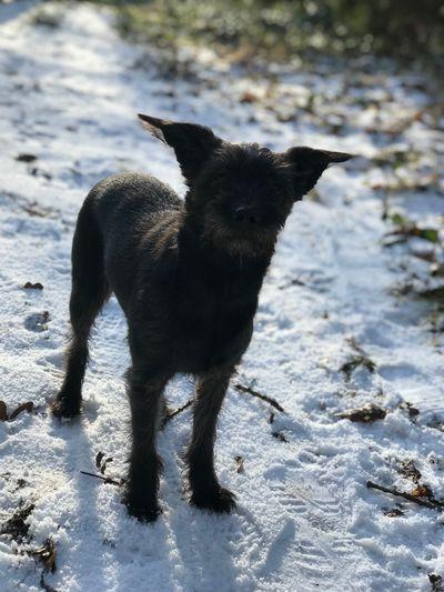 Snow Domestic Animals Mammal Nature Day Portrait First Eyeem Photo