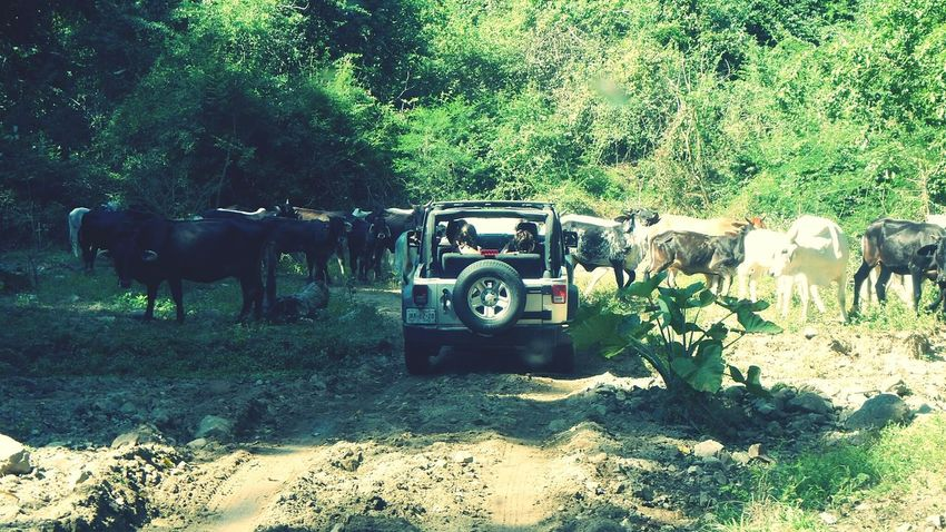 mexican traffic jam Eye4photography  Offroading Puerto Vallarta Beautiful Nature Nature Photography How's The Weather Today? From My Point Of View@eyeteam Eyeemtravel  Travelphotography Besteyeemtravel