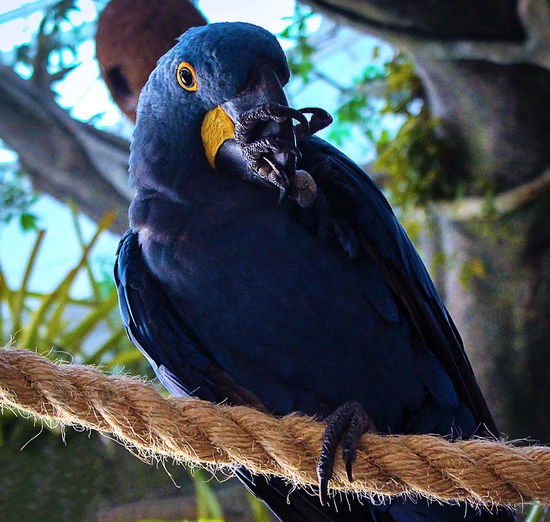 Close-up of bird perching on a branch
