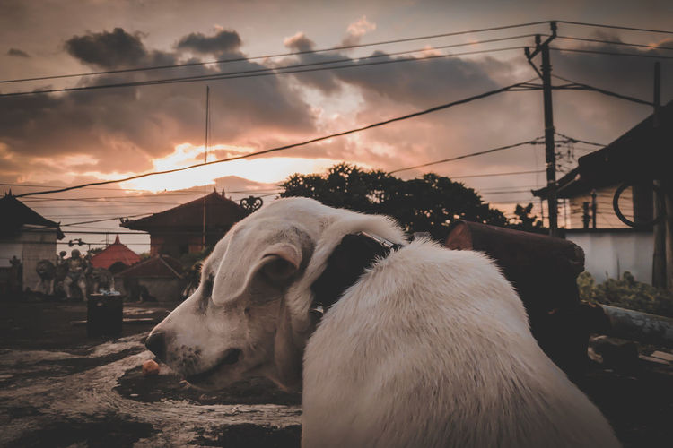 View of a dog looking at sunset