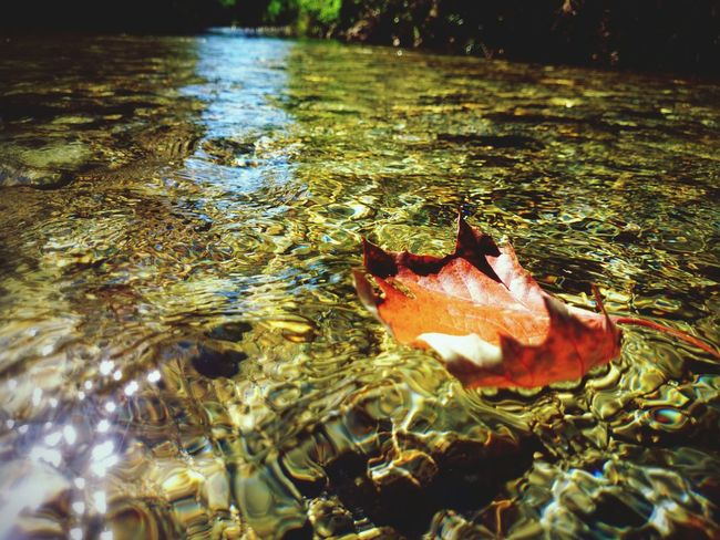 Eyem Nature Lovers  Water Reflections Nature Taking Photos