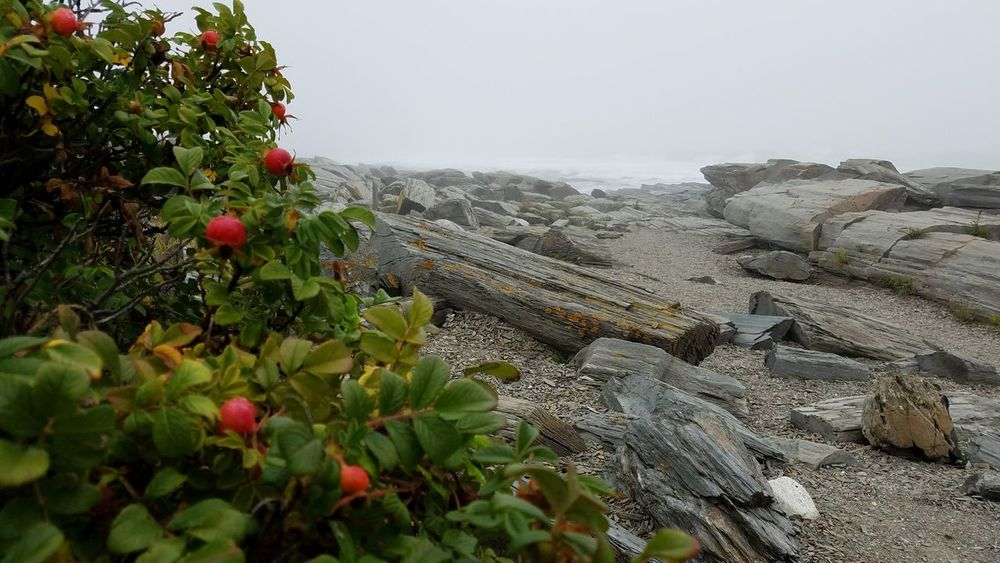 Nature Beauty In Nature Sea No People Horizon Over Water Ocean Rocky Beach Rose Hips Maine