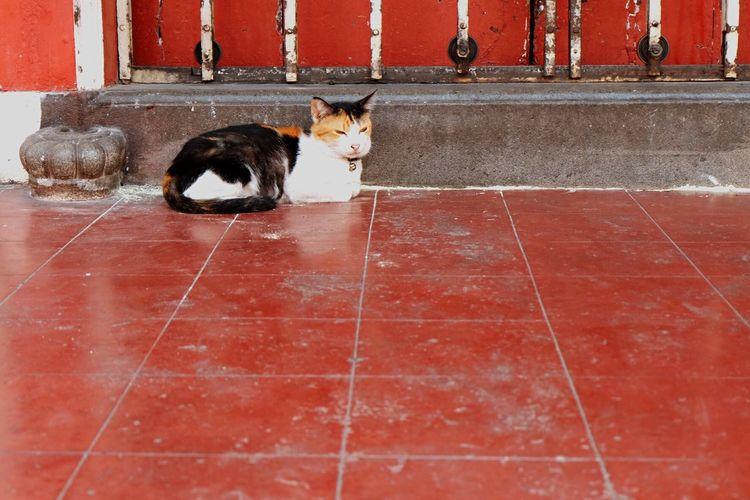 Cat Fujifilm