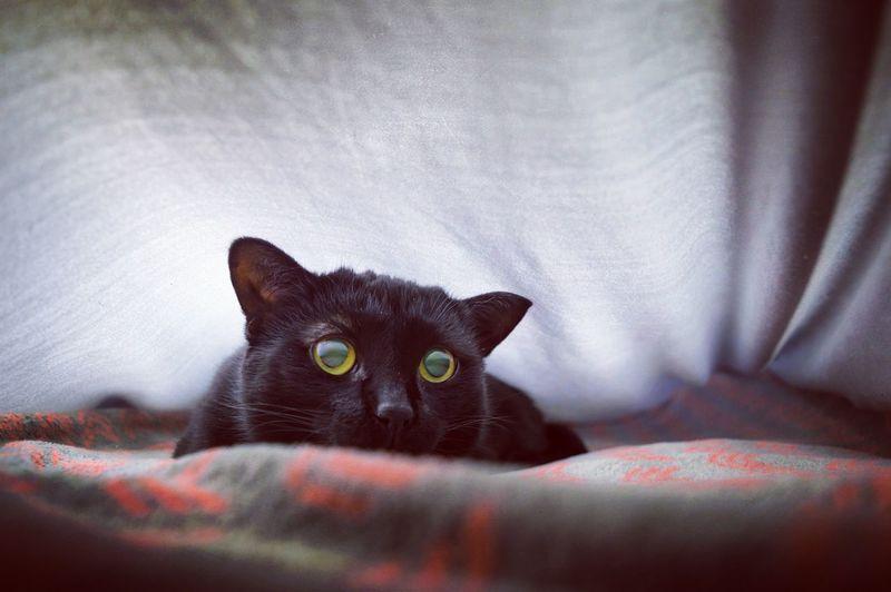 Black Cat Black Cats Cat Lovers Unique Light Fine Art Photography
