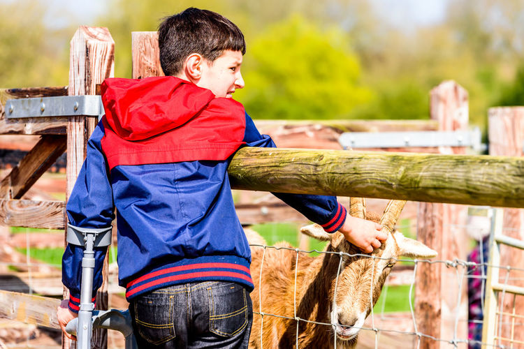 Rear view of disabled boy touching goat while looking away