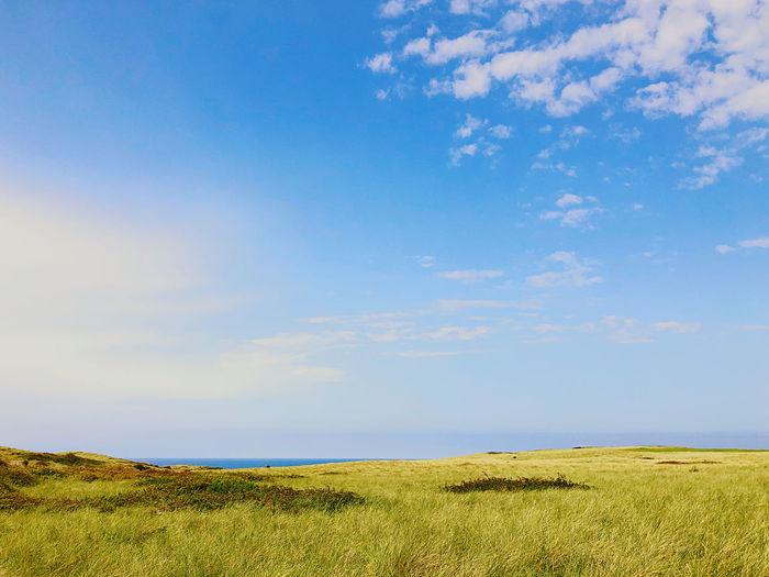 Sky Land Grass
