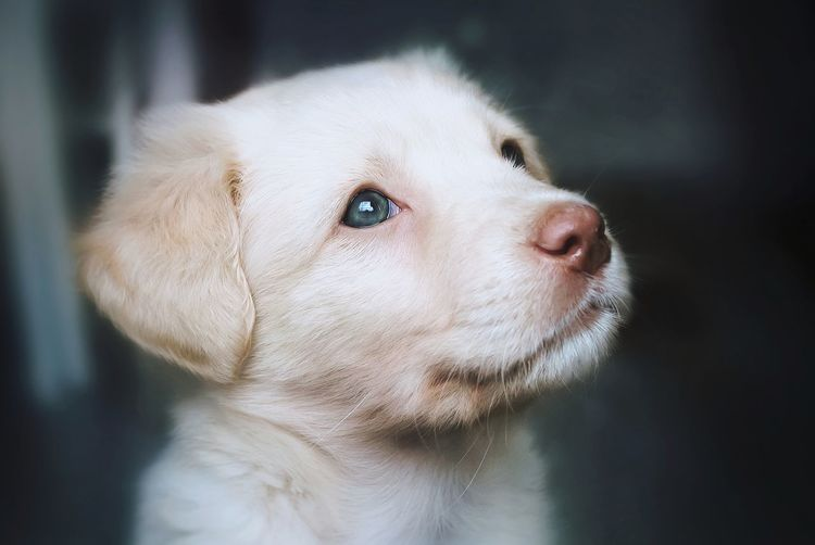 Close-up of puppy looking up