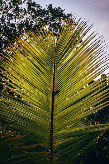 Malediven  Kuredu Kuredu Island Maldives Nature Outdoors Seaside Seaside_collection Palm Tree BeachHouse Palmtrees Summer Sunset #sun #clouds #skylovers #sky #nature #beautifulinnature #naturalbeauty #photography #landscape Plant Tree Growth No People Sky
