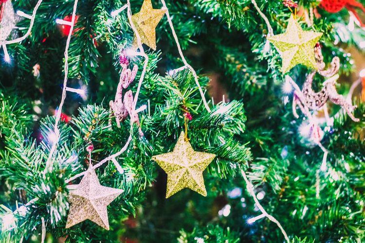 Close-up of christmas tree