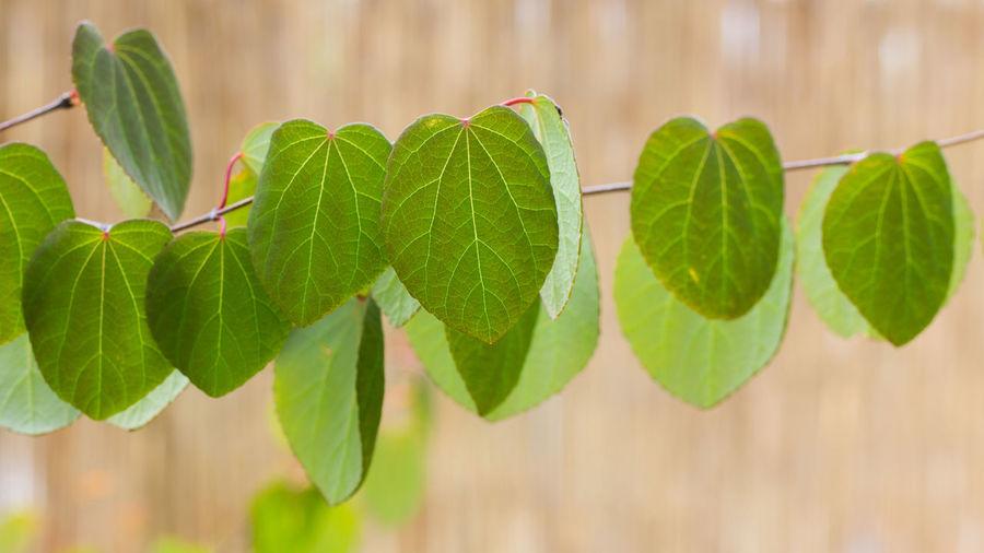Leaves🌿 Leaves