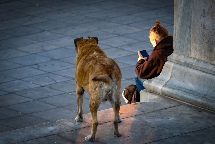 Animal Themes Athens, Greece City Dog Homeless Mind Your Business One Person Outdoors People Pets Syntagma Square Vignette