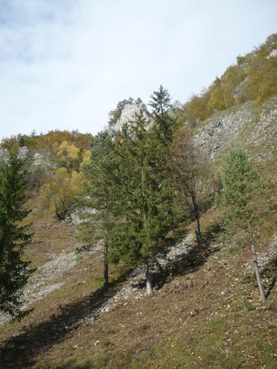 Pieniny Slovakia Tree Stone Growing Up Lesnica