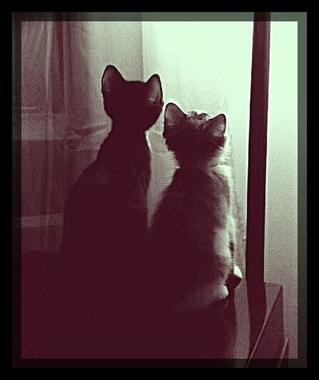 My two preoccupied little kitties. Stopping Time Aristocats Two Peas In A Pod Kitten