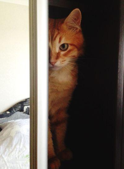 рыжий кот Афоня Cat Afonsiko Cat♡ Áfonya Cats