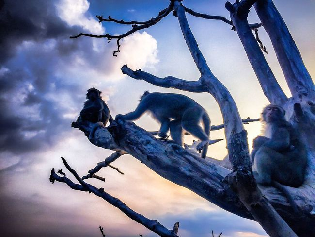 Monkey Low Angle View Animal Themes Wildlife Bare Tree Cloud Nature Cloud - Sky Beauty In Nature Sky