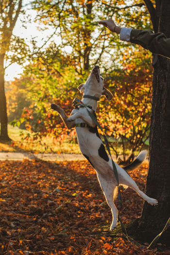 Animal Animal Themes Animal Wildlife Autumn Change Day Focus On Foreground Forest Land Leaf Mammal Nature No People One Animal Outdoors Plant Plant Part Tree Tree Trunk Vertebrate