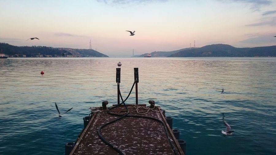 Birds Flying Over Bosphorus