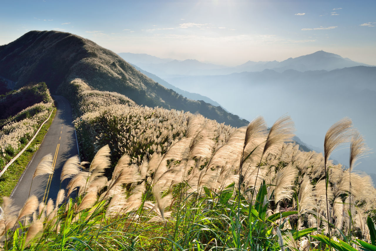 Autumn hill, open Manshan flowers, like snowflakes beautiful. Autumn Flowering Miscanthus Beauty In Nature Broad View Day Fall Grass Growth Highway Landscape Mountain Mountain Flowers Mountain Range Nature No People Outdoors Scenics Sky Sunlight Sunny Weather Tranquil Scene Tranquility Travel Destinations Wind