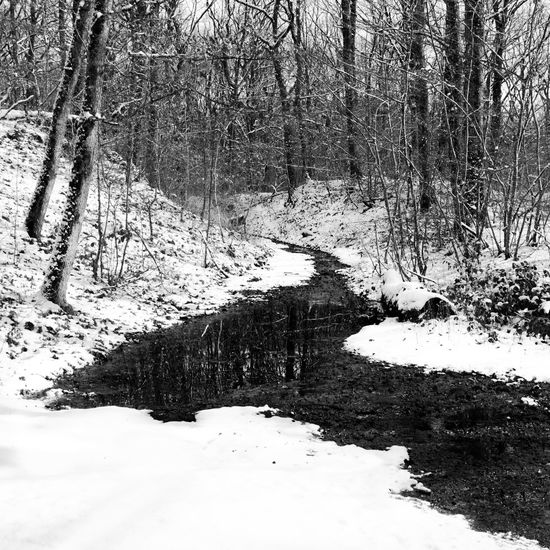 Bare Tree Cold Cold Temperature Covered Covering Day Forest Forest Path Frozen Ice Landscape Monochrome Nature Outdoors River Season  Snow Snow Covered Tranquility Tree Water Weather White White Color Winter