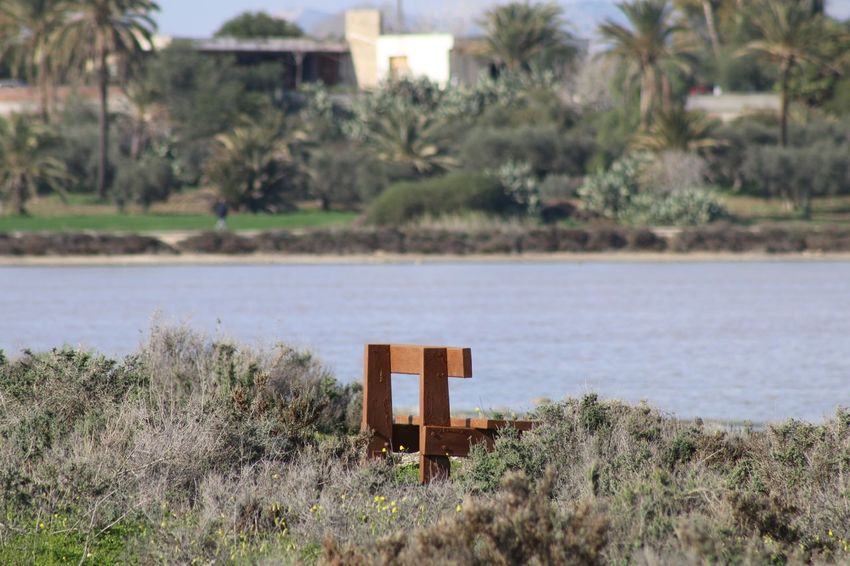 Larnaca, Cyprus Nature Photography Nature_collection Wood - Material Wood Salt Lake Cyprus Larnaca Nature Day No People Tranquility Tranquil Scene Outdoors Tree Landscape Plant Grass Scenics Beauty In Nature Growth Water Sky