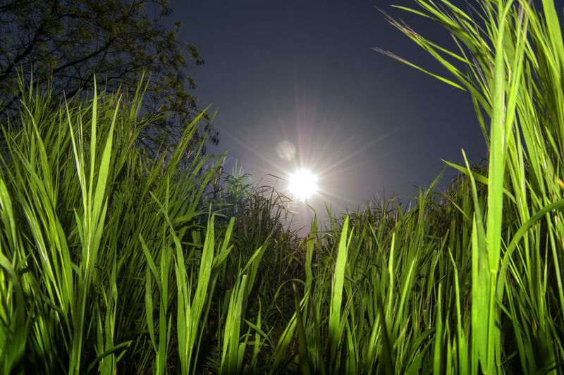 The sun between the leaves at ground level Beauty In Nature Blade Of Grass Bright Brightly Lit Day Field Grass Green Color Ground Level View Growth Land Lens Flare Low Angle View Nature No People Outdoors Plant Sky Sun Sunlight Tranquility