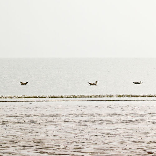 Flights Tranquility Bird And Beach Bird And Beach Scape Grey Sky Nature Seagulls Floating Sky And Sea Water Waterfront