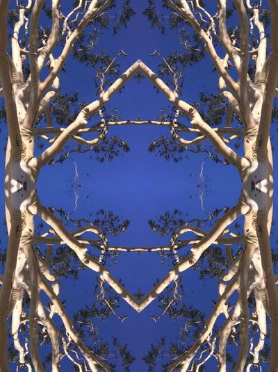 Tree frame Day Blue Full Frame No People Outdoors Backgrounds Close-up Branch Sky Tree Clear Sky Nature Pattern Déco Art Border Frame Mirror Mirrored Branches Frame It! VSCO Tranquility Gnarly Big Tree Cut And Paste EyeEmNewHere Break The Mold
