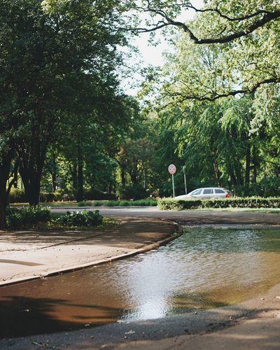 Tree Water Car