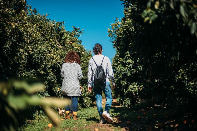 Rear view of friends walking against trees